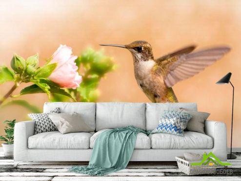 Птицы  Фотообои Полет колибри