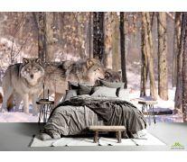 Фотообои волки в лесу