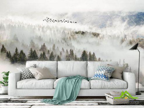 Природа Фотообои Птицы над туманным лесом