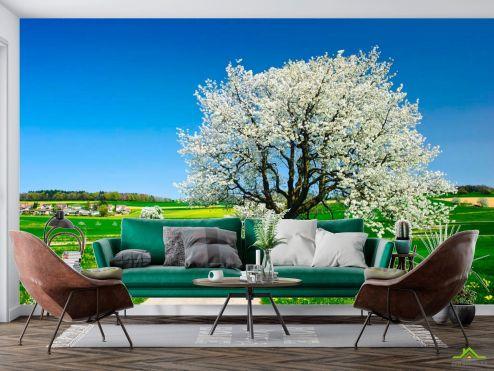 Природа Фотообои Весна, цвет