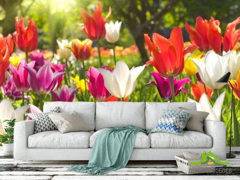 обои Цветы Фотообои Остроконечные тюльпаны