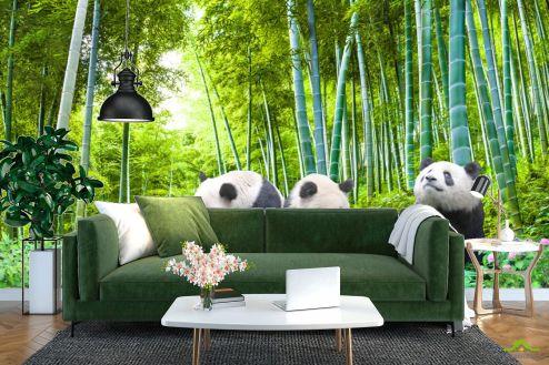 Природа Фотообои Панды в бамбуке купить