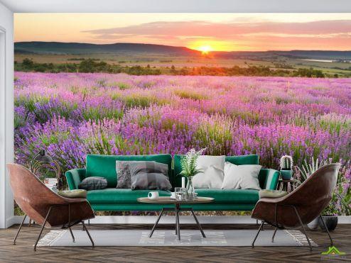 Фотообои Природа по выгодной цене Фотообои Лавандовое поле на закате