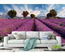 Фотообои Поле цветов