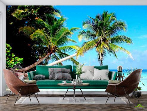 Пальмы Фотообои Пальмы и море купить