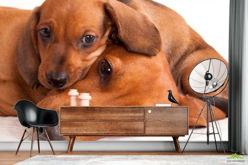 Собаки Фотообои Щенок с матерью