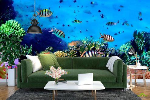Море Фотообои Подводный мир. Красоты.