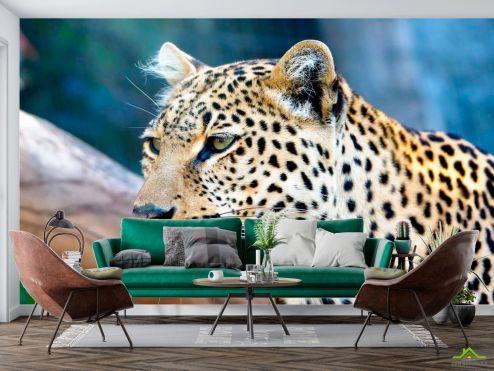 Гепарды Фотообои Гордый гепард