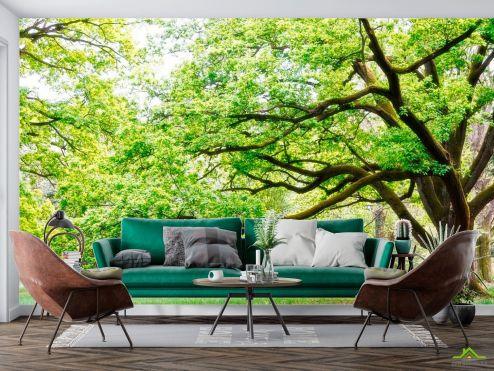 Фотообои Природа по выгодной цене Фотообои Много веток, дерево