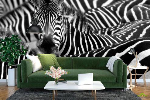 Зебры Фотообои Любопытная зебра
