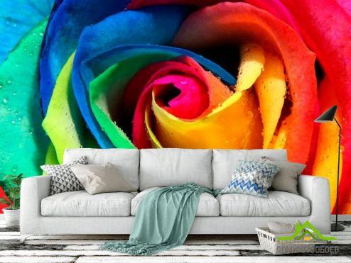 обои Цветы Фотообои Разноцветная роза