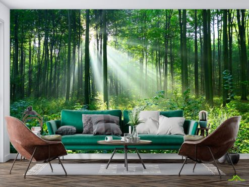 Природа Фотообои зеленые деревья в лесу