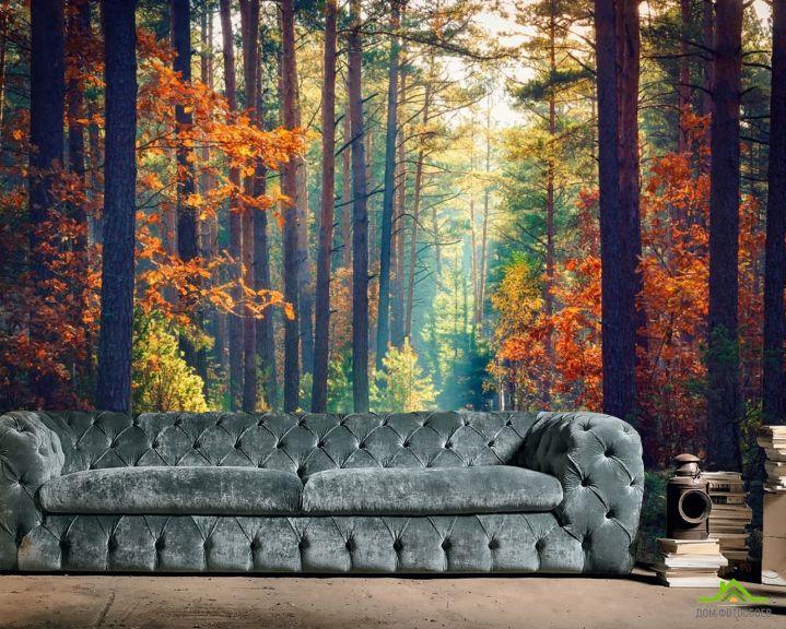 Фотообои сентябрьский лес