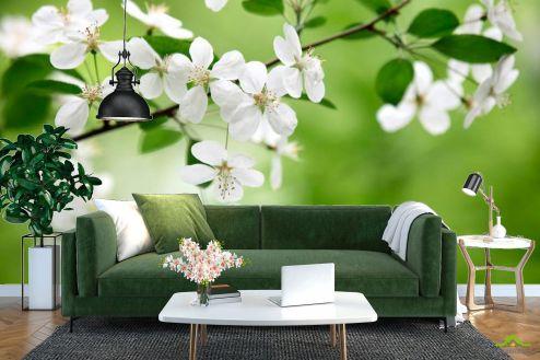 Абрикос Фотообои Абрикосовые соцветия