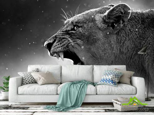 Черно-белые обои Фотообои львица