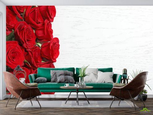 Розы Фотообои красные розы на белом фоне