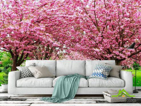 обои Розовые деревья Фотообои Сакура