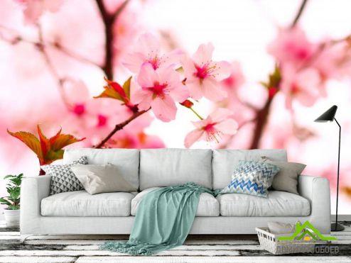 Вишня Фотообои Цветы вишни весной