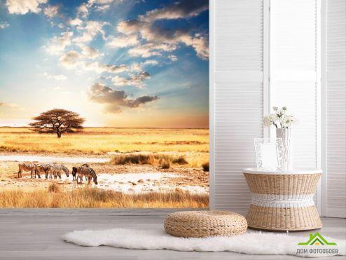 Зебры Фотообои Зебры в пустыне