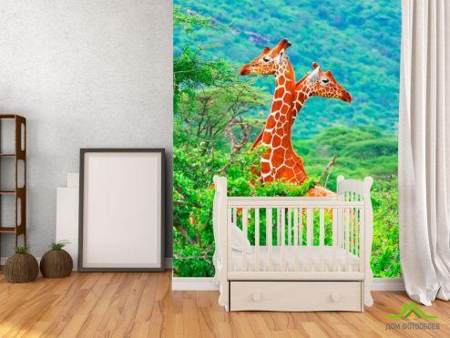 обои Жирафы Фотообои Жирафы среди деревьев