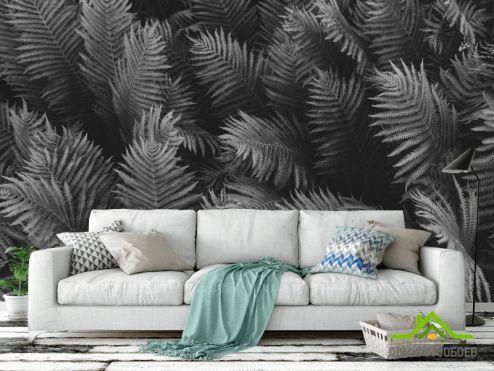 Черно-белые  Фотообои листья