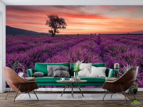 по выгодной цене Фотообои сиреневое поле и розовый закат