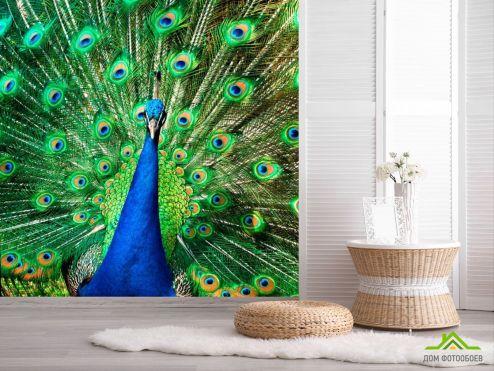 обои Птицы  Фотообои Прекрасный павлин