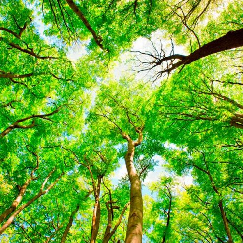 обои на потолок Фотообои Тонкие деревья