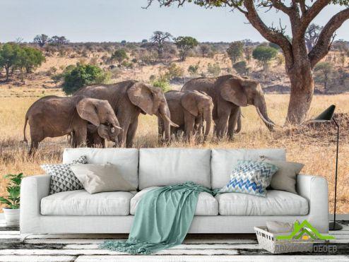 обои Животные Фотообои слоны и слонята