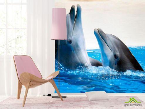 Дельфины Фотообои Общение дельфинов