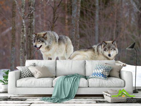 Фотошпалери Тварини Фотошпалери два вовка на снігу