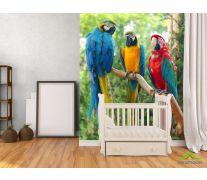 Фотообои три попугая