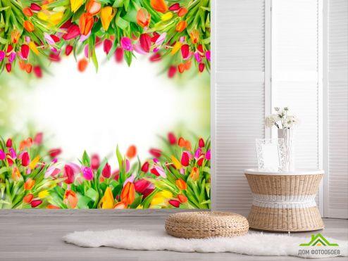 обои Цветы Фотообои Рамка из тюльпанов