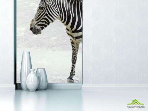обои Животные Фотообои Задумчивая зебра