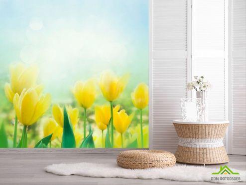 обои Цветы Фотообои Тюльпаны желтые