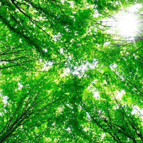 обои на потолок Фотообои Деревья, свет