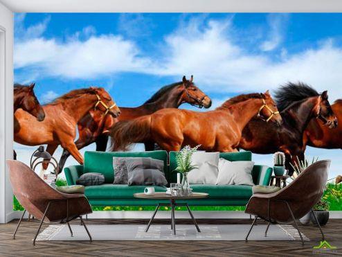 Животные Фотообои Табун бегущих лошадей