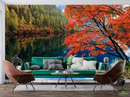 Природа Фотообои Отражение, лес, вода