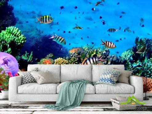 обои Рыбы и море Фотообои Подводный мир. Красоты.