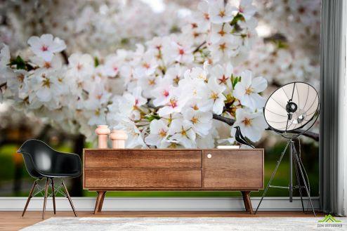 Абрикос Фотообои Абрикосовые маленькие цветочки