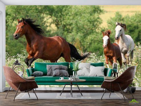 Животные Фотообои Лошади на лугу