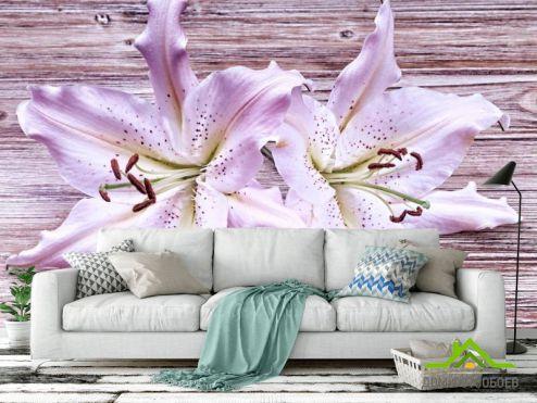 Фотообои Лилии по выгодной цене Фотообои Лилии сиреневые