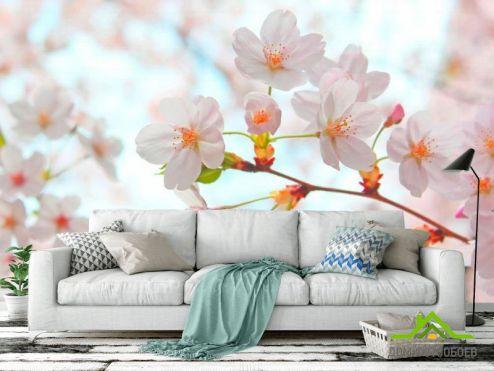 обои Абрикос Фотообои Цветет абрикос весной