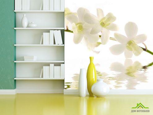 Кипарис Фотообои Белый кипарис
