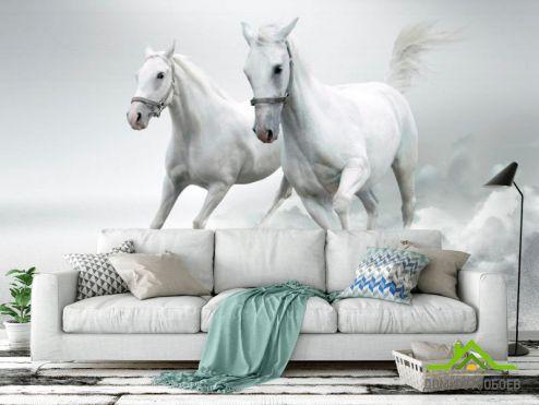 Лошади Фотообои Две белых лошади