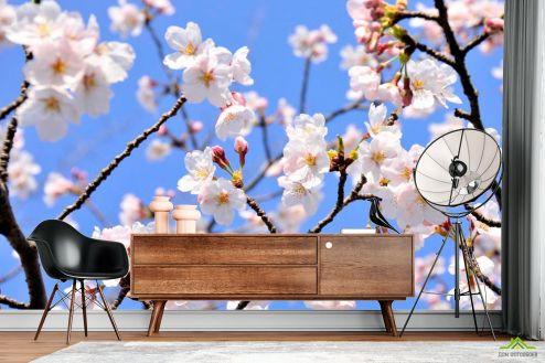 Абрикос Фотообои Расцвели абрикосы весной