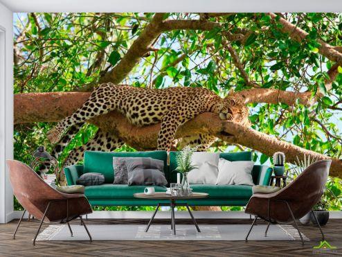Животные Фотообои Спящий гепард
