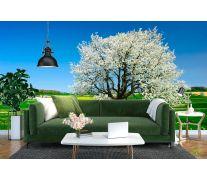 Фотообои Весна, цвет