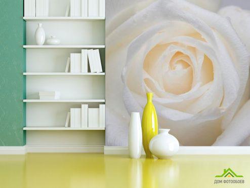 обои Цветы Фотообои Распустилась белая роза