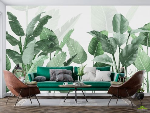 тропические листья Фотообои Банановые листья
